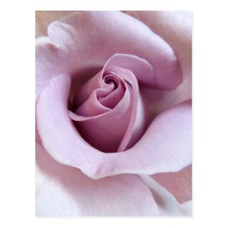 Purple Rose Wedding Photo Postcard