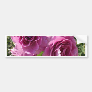 Purple Roses Bumper Sticker