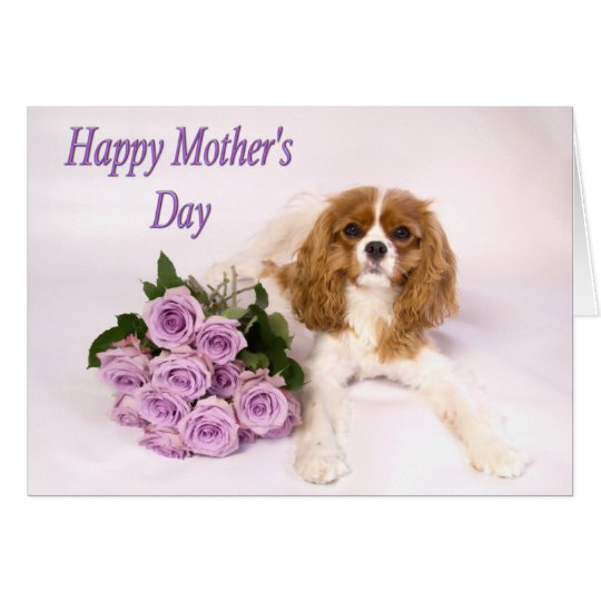 Purple Roses Mother's Day Card Cavalier King Dog