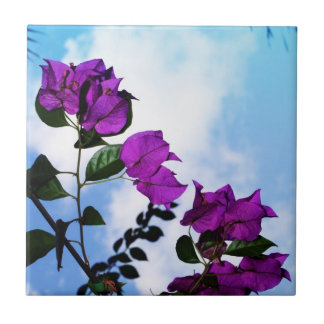 Purple Roses Nature Photo Collection Tiles