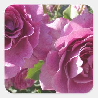 Purple Roses Square Sticker