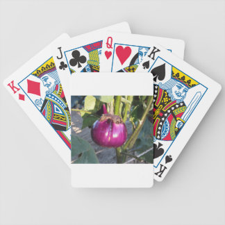 Purple round eggplant hanging on tree bicycle playing cards