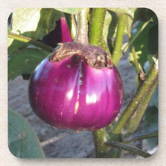 Purple round eggplant hanging on tree coaster