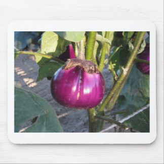 Purple round eggplant hanging on tree mouse pad