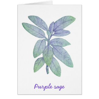 Purple sage card