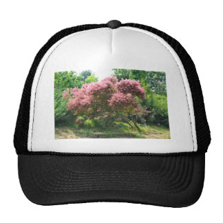 Purple Smoke Tree Cap