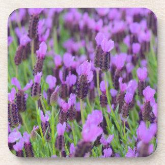 Purple Spanish Lavender Flower Coaster