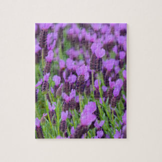 Purple Spanish Lavender Flower Jigsaw Puzzle