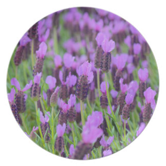 Purple Spanish Lavender Flower Plate