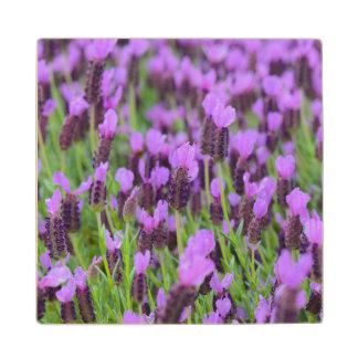 Purple Spanish Lavender Flower Wood Coaster