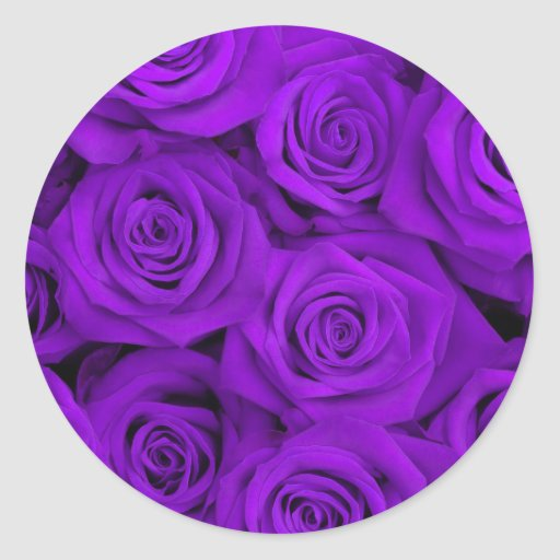 Purple Spectacular Roses Round Stickers