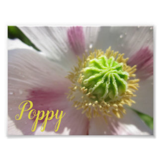 Purple Spot & White Poppy Macro Stock Photo