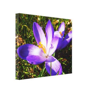 Purple Spring Flowers Canvas Print