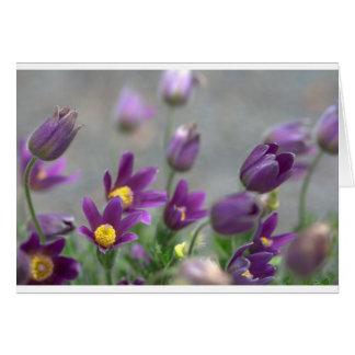 Purple Spring flowers Greeting Card
