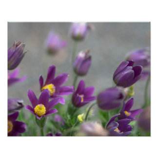Purple Spring Flowers Print