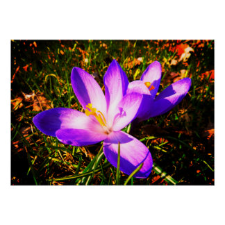 Purple Spring Flowers Poster