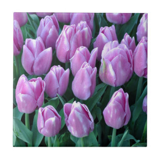 Purple spring tulips small square tile