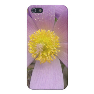 Purple Star Case For iPhone 5/5S