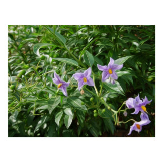 Purple star flowers postcard