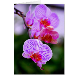 Purple Striped Phalaenopsis Orchid Card