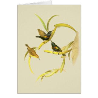 Purple Sunbird Card