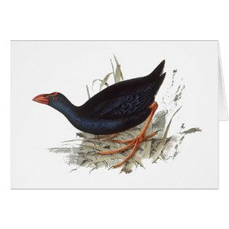 Purple Swamphen Card
