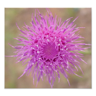 Purple Thistle Flower Poster