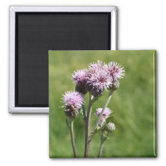 Purple Thistle Photo Magnet