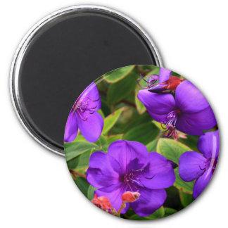 Purple Tibouchina Flowers Magnet