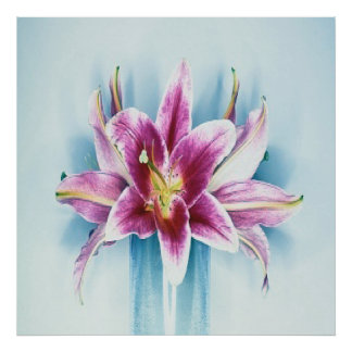 Purple Tiger Lilly Poster
