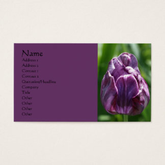 Purple Tulip Flower Photography Business Card