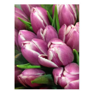 Purple Tulip Flowers Postcard