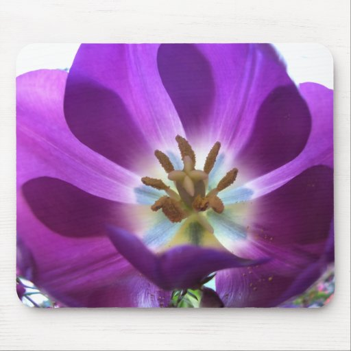 Purple Tulip Mouse Pad