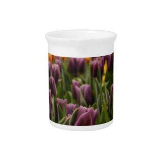 Purple Tulip Pitchers