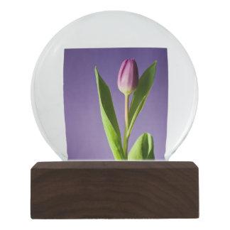 Purple tulip snow globe