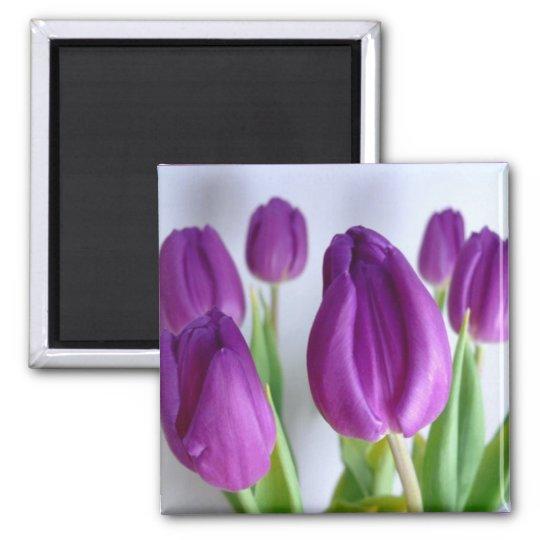 Purple Tulip Spring Magnet