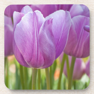 Purple Tulips Blooming in Spring Coaster