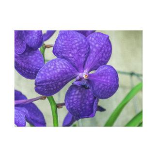 Purple vanda orchid canvas print