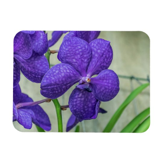 Purple vanda orchids fridge magnet