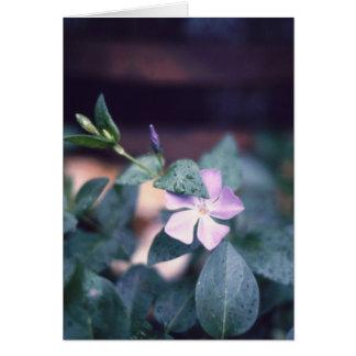 Purple Vinca Flower Notecard
