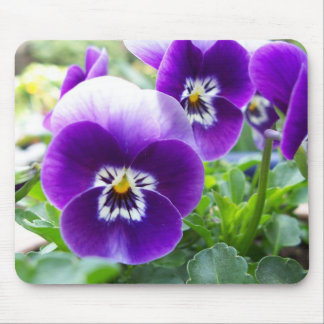 Purple Violas Mouse Pad