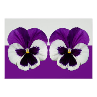 Purple Violet Pansy Flowers Poster