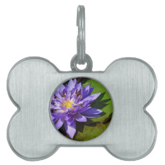 Purple water lilies floating in a pond pet tag
