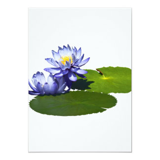 Purple Water Lilies in Sunshine Announcement