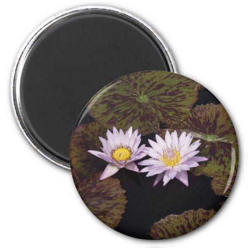 Purple Water Lilies Fridge Magnet
