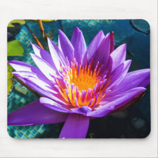 Purple Water Lilies Mouse Pad