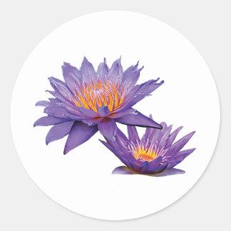 Purple Water Lilies Sticker
