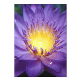 "Purple Water Lily 5"" X 7"" Invitation"