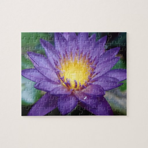 Purple Water Lily 8x10 Photo Puzzle with Gift Box