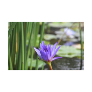 Purple Water Lily Canvas Prints